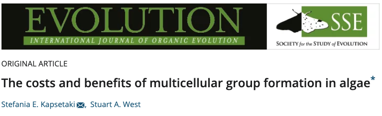 The costs and benefits of multicellular group formation in algae