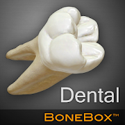 Bone Box for Dental