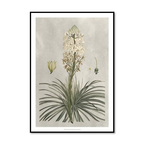 Tropical Varieties III - Framed & Mounted Art