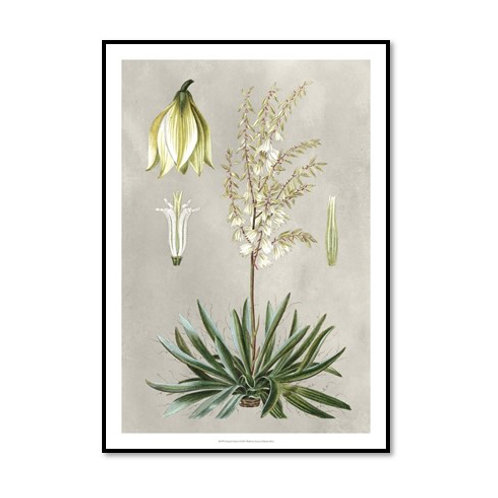 Tropical Varieties I - Framed & Mounted Art