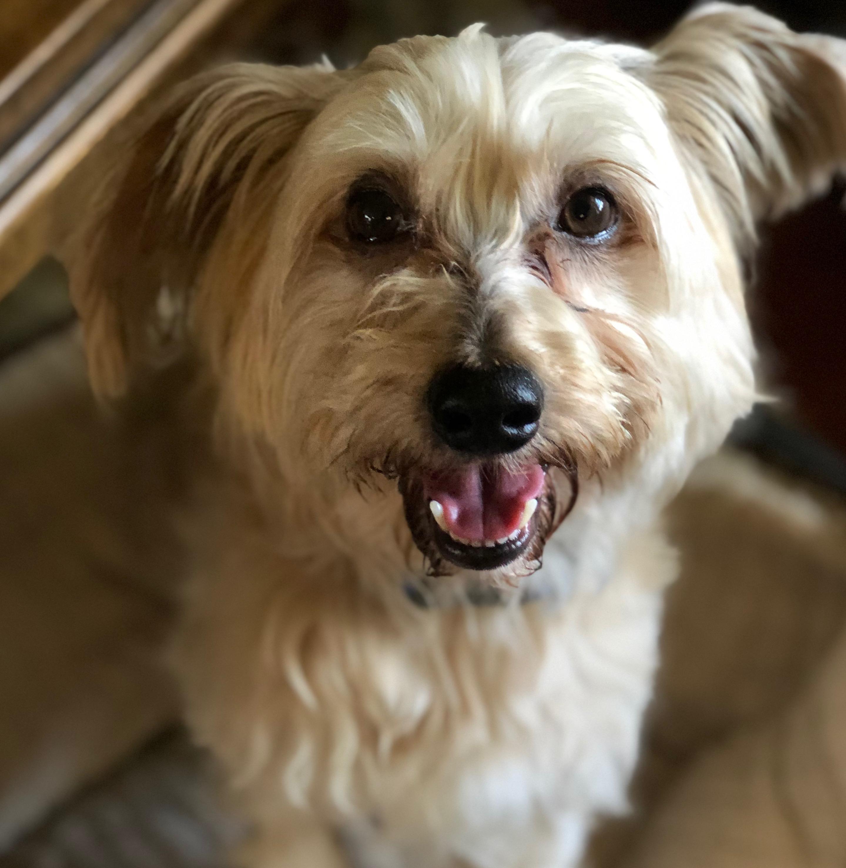 Hobie: adopted