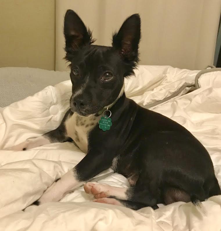 Eddie-Adopted