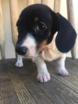 Elvis-adopted