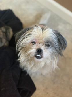 Bella-adopted