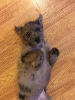 Sumi-Adopted