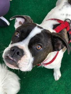 Lola-Adopted