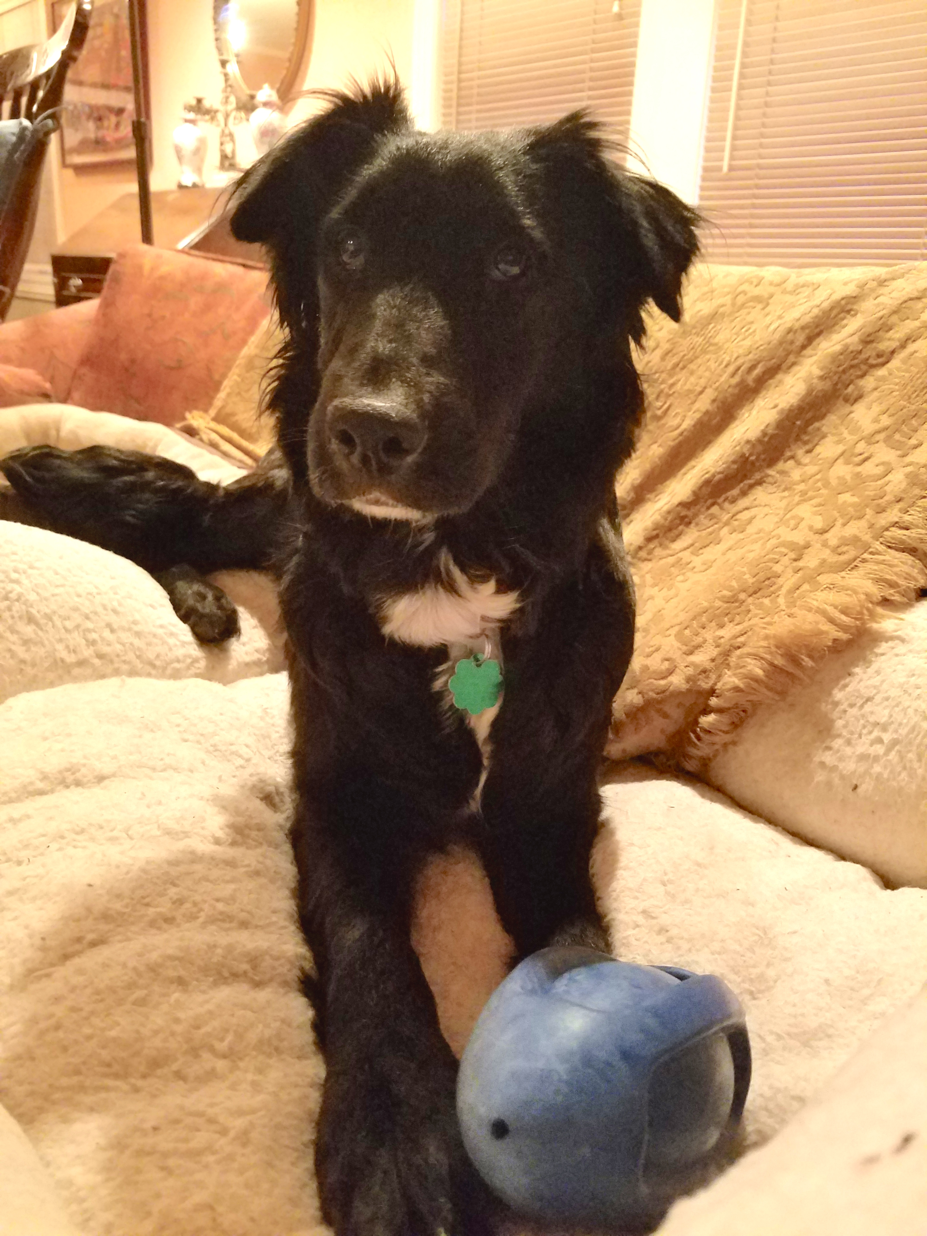 Cheyanne-Adopted
