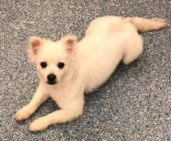 Billie Jean-Adopted