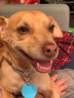 Niko-adopted