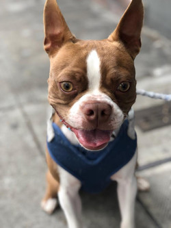 Cosmo-Adopted
