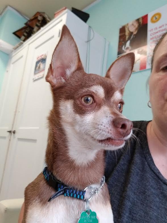 Gino-Adopted