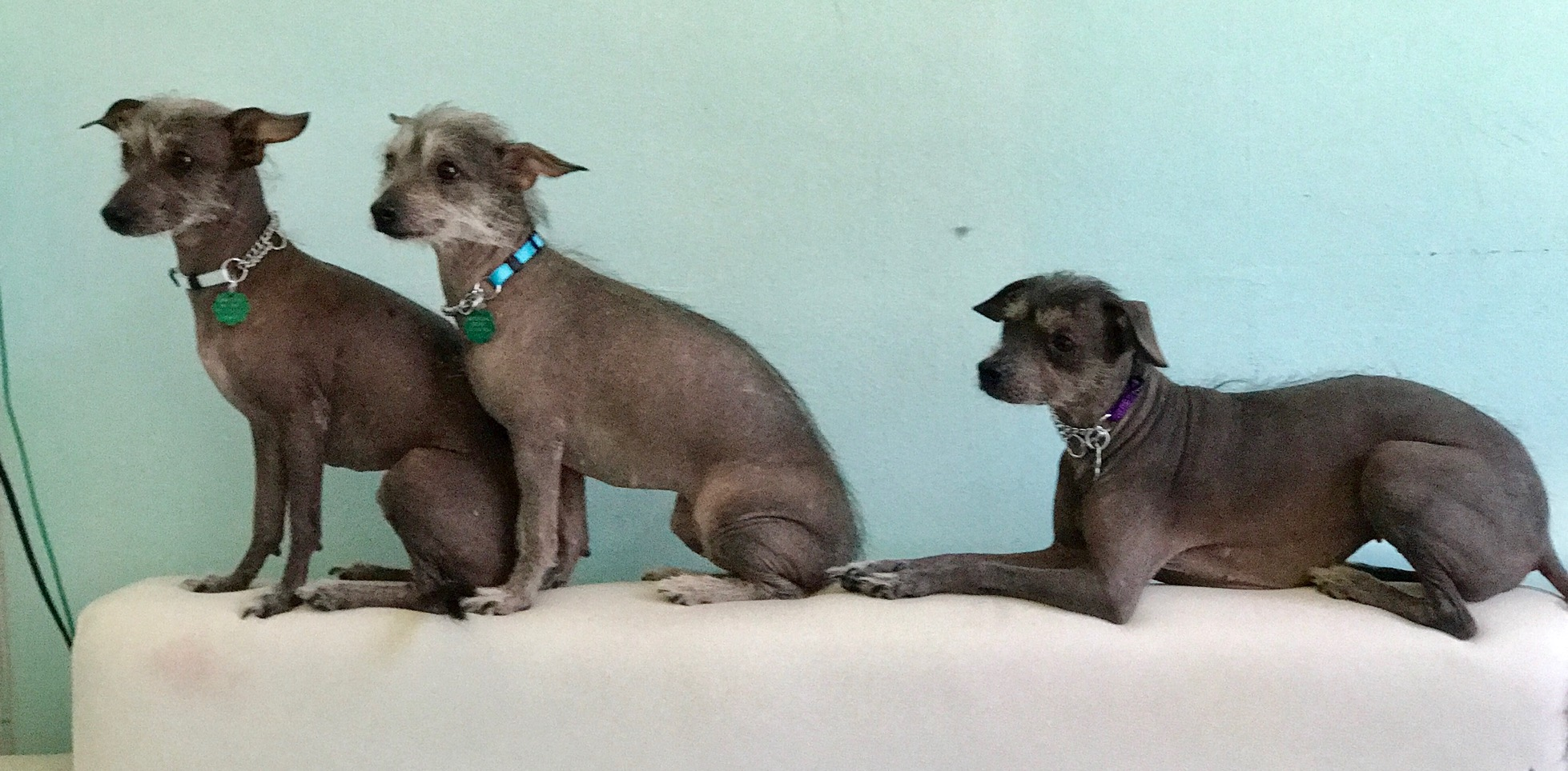 Rosie/Violet/Bluebell-Adopted