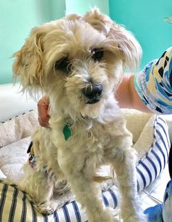 Alfie-Adopted