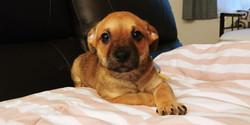 Sammy-Adopted
