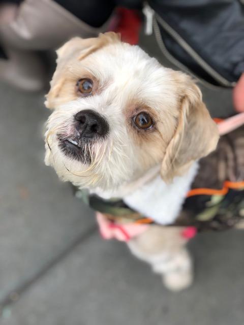 Austin-Adopted