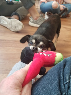 Igor-Adopted