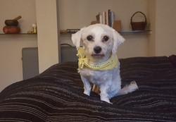 Suki - Adopted