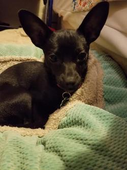 Dot-Adopted
