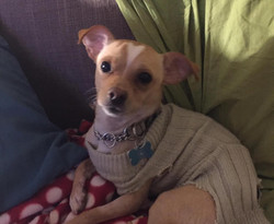 Romeo - Adopted