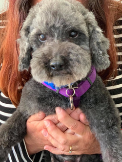 Tuffy-adopted