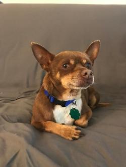 Brownie-Adopted
