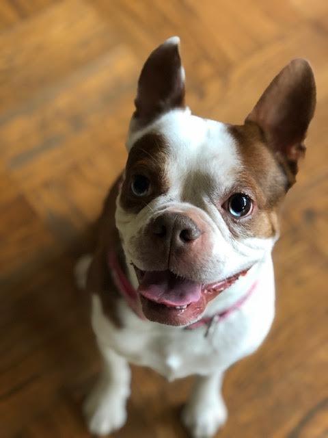 Charlie Bob-Adopted