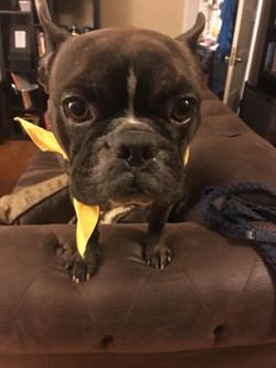 Bronx-Adopted