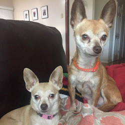 Mitzi and Maddy-adopted
