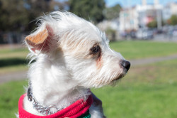 Dottie-Adopted