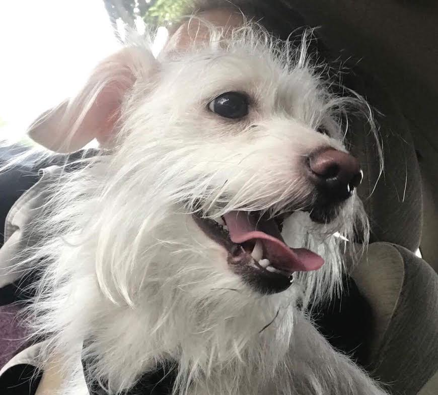 Nellie-Adopted