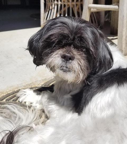 Chloe-adopted