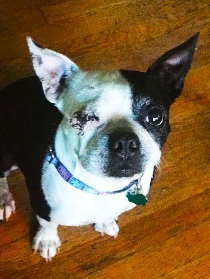 Stella-Adopted