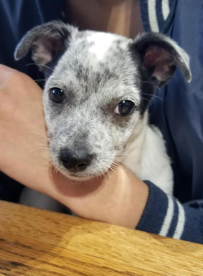 Oreo-Adopted