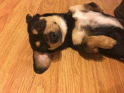 Memo-Adopted