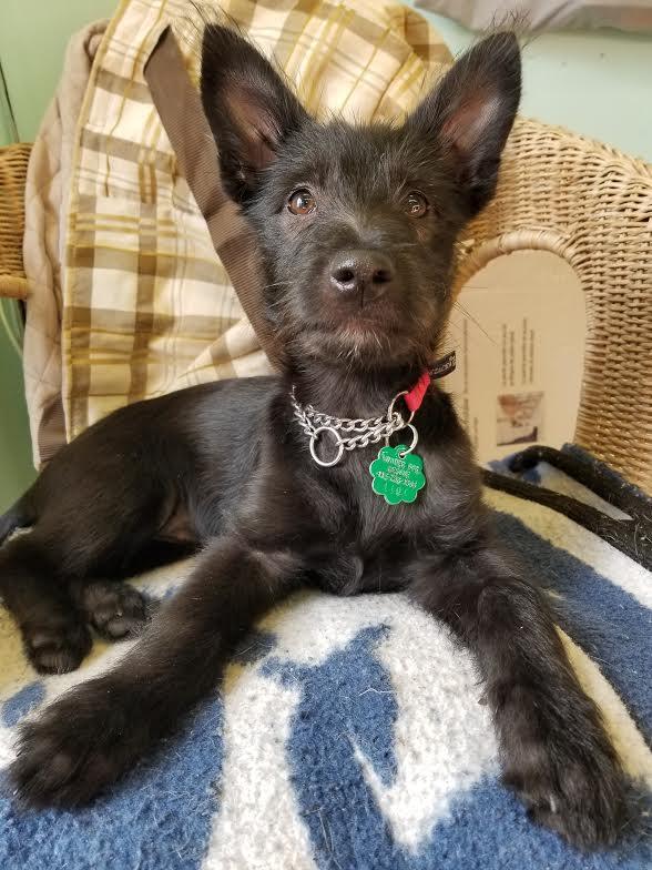 Yubin-Adopted