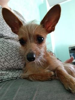 Savannah-Adopted