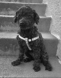 Fiona-Adopted