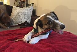 Jackson - Adopted