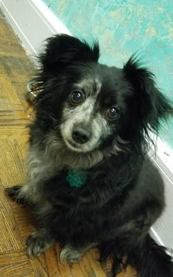 Daisy Mae-Adopted