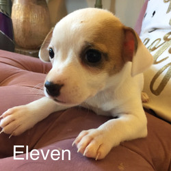 Eleven-Adopted