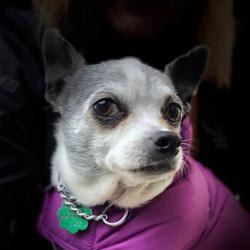 Vitola-Adopted