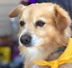 Chino-Adopted