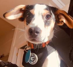 Herman-adopted