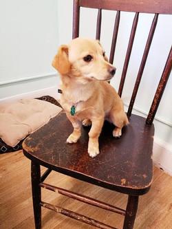 Hannah-Adopted