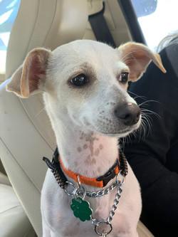 Seamus-adopted