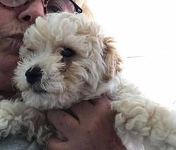Denver - Adopted