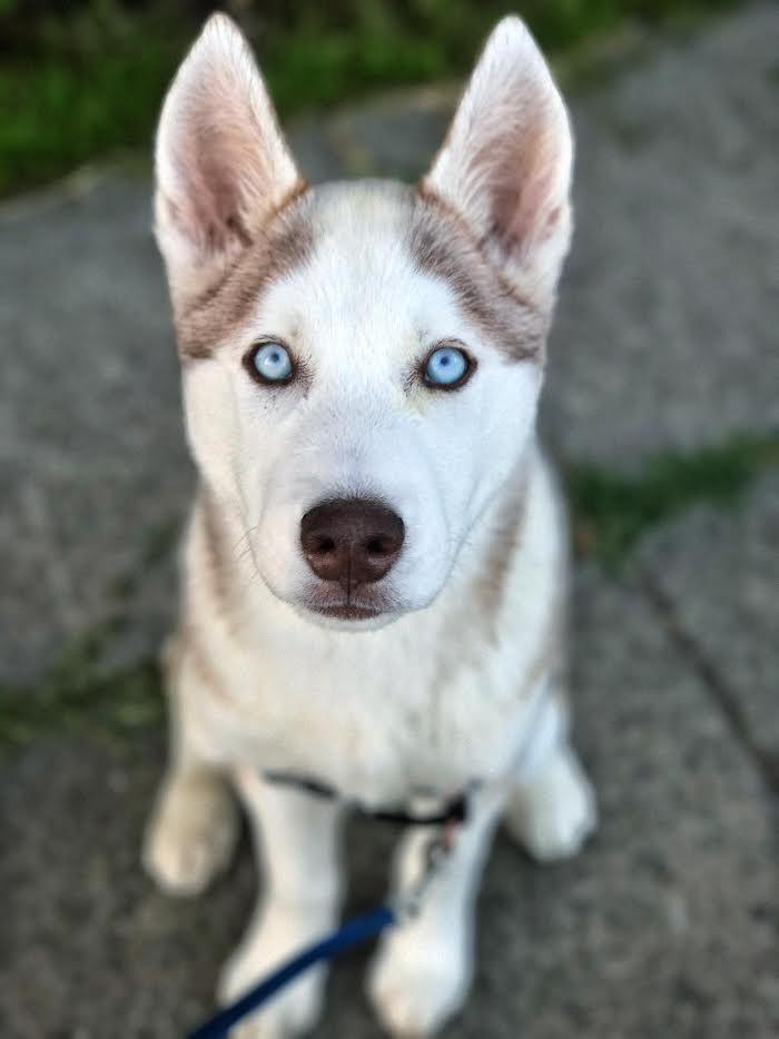 Skye-Adopted