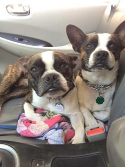 Jaco and Jojo-Adopted