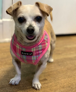 Coco-adopted