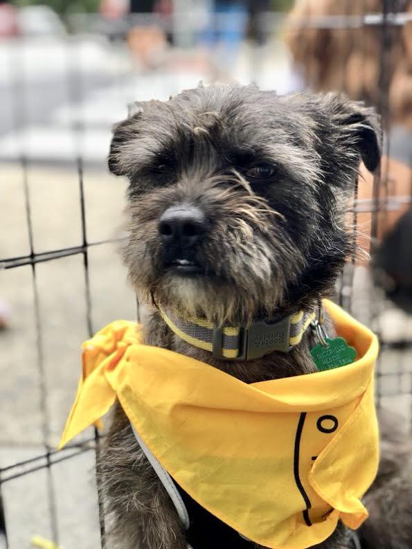 Angus-Adopted